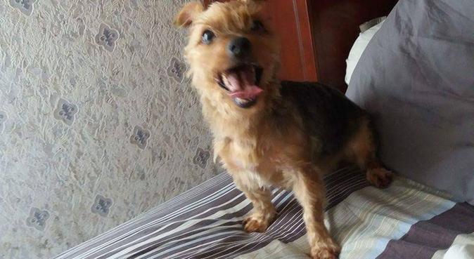 Le chien est roi a Illkirch, dog sitter à Illkirch-Graffenstaden