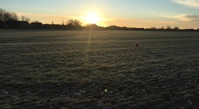 Happy Paws dog walks., dog sitter in York