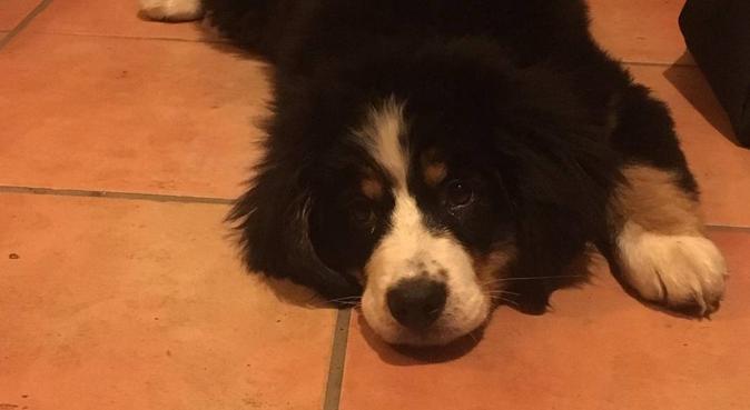 Chiens heureux bisous baveux, dog sitter à Paris