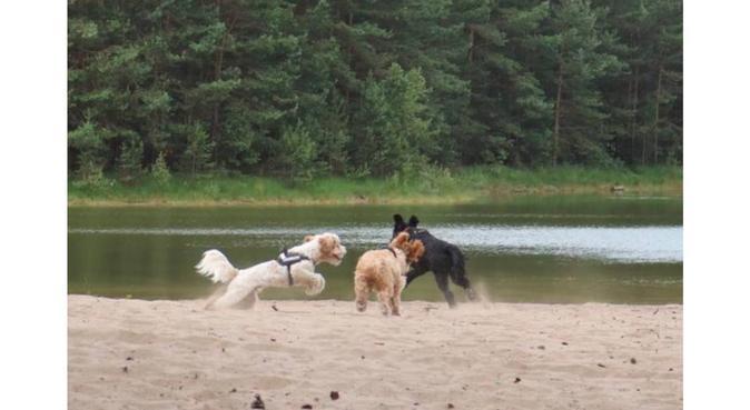 Oppas in huiselijke sfeer!, hondenoppas in Ewijk
