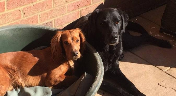 Dog Lover- All Breeds, dog sitter in Cambridge