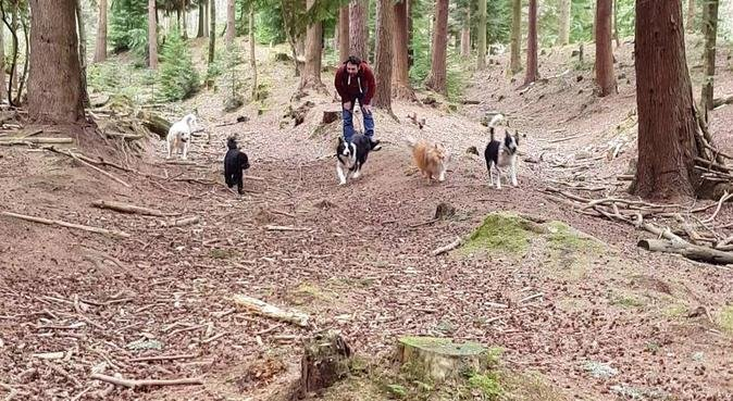 Hugo's Adventure Walkies, Bournemouth, dog sitter in Bournemouth