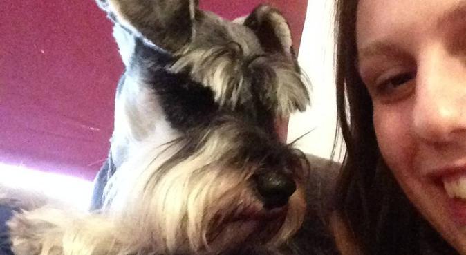Dog heaven, dog sitter in Cardiff