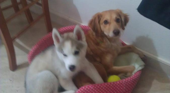 Affidabilità e onestà verso i vostri cari amici, dog sitter a Bari