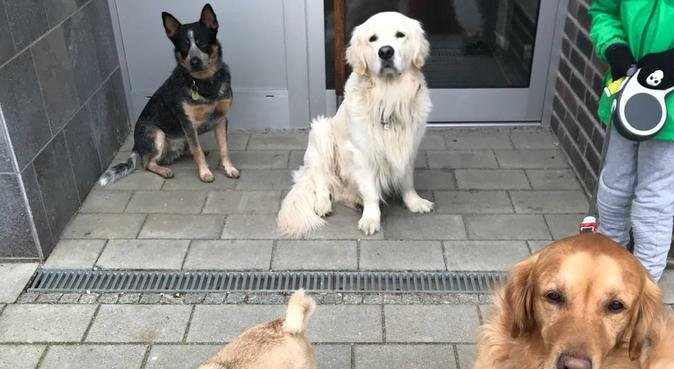 Paradies Auf Erden, Hundesitter in Hamburg