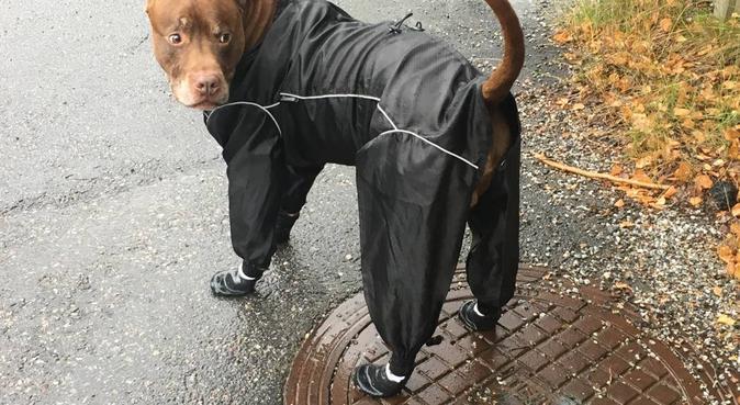 Experienced Dog walking i Nacka ;-), hundvakt nära Stockholm