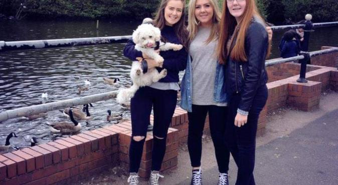 Dog Lover in Sutton Coldfield, dog sitter in Birmingham, UK