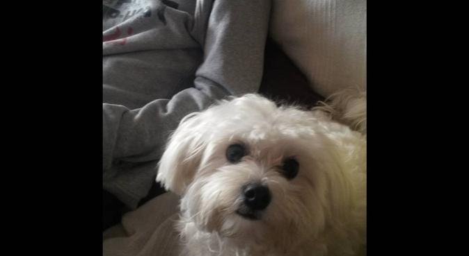 Un nid rassurant pour mes invités, dog sitter à Paris