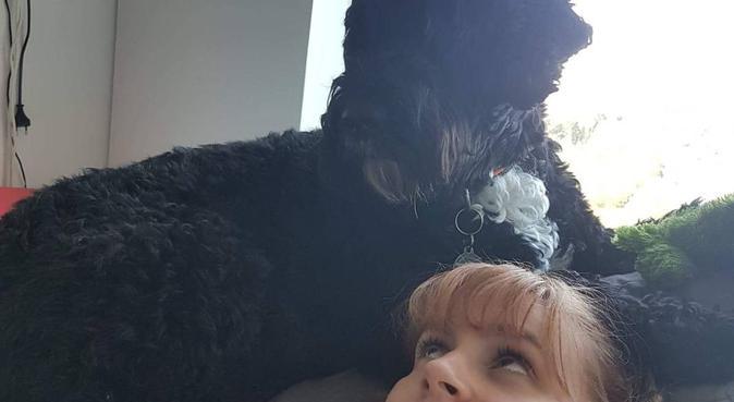 Des balades de tout type pour vos chiens à Paris, dog sitter à Paris
