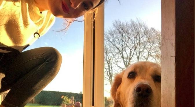 Hannah's Happy Dog Day Care and Walking, dog sitter in Portsmouth, Southsea, UK