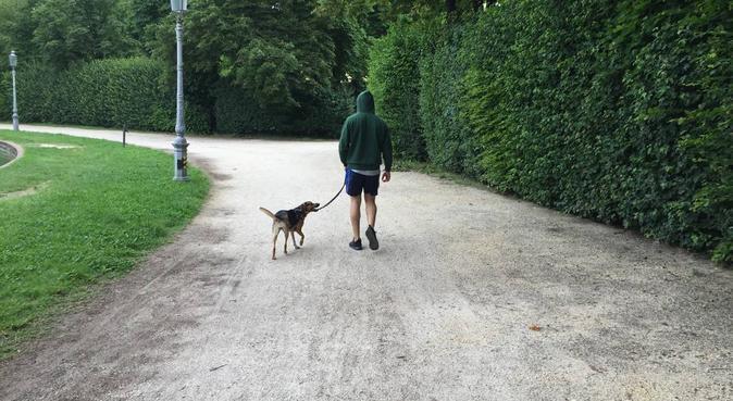 affetto, coccole e passeggiate, in buone mani, dog sitter a Parma, PR, Italia