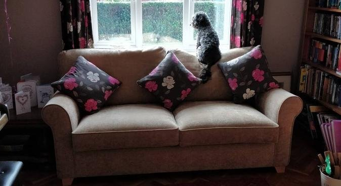 A friendly home for any dog to spend a day in, dog sitter in Malvern