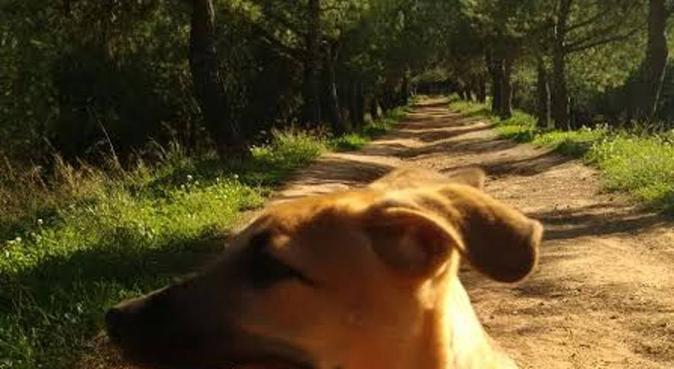 Cuidado personalizado para tu mejor amigo, canguro en Sant Quirze del Vallès