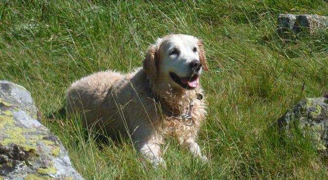Faites le plein d'amour,de balade et de croquettes, dog sitter à MONTPELLIER