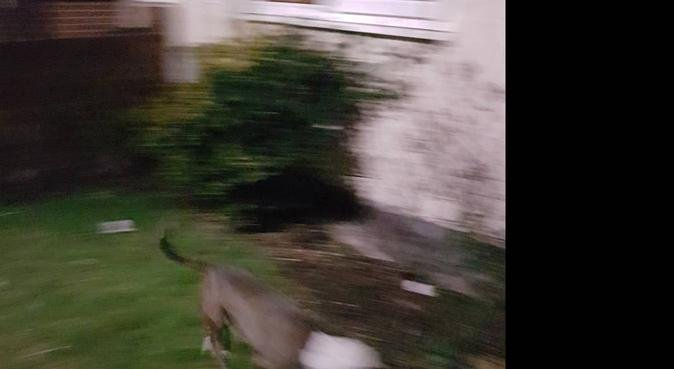 Energetic Dog Walker- Dagenham (incl. Large Breed), dog sitter in London Borough of Barking and Dagenham