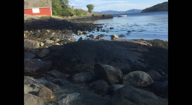 Helgepassing/dagspassing av hunder, hundepassere i Osøyro