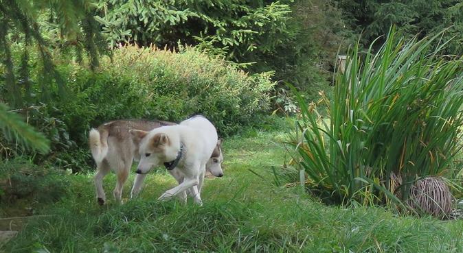Katy's DOG WALKING, dog sitter in Chester