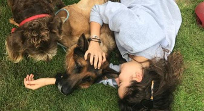 Qualified Dog sitter and Walker (BsC Animal Behav), dog sitter in Epping