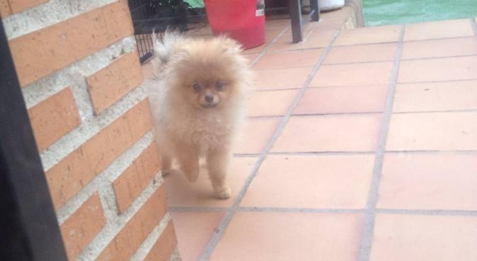 Cuido perros en su domicilio tengo 18 años, dog sitter in Las Palmas