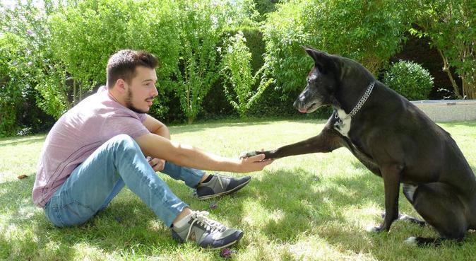 Promenade au calme, dog sitter à Ballan-Miré
