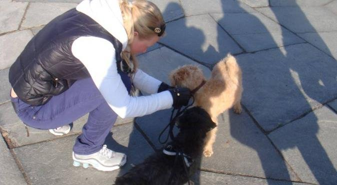 Hjemmeværende forfatter som elsker hunder, hundepassere i Oslo