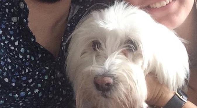 Séjour aux petits oignons pour chiens, dog sitter à Rennes