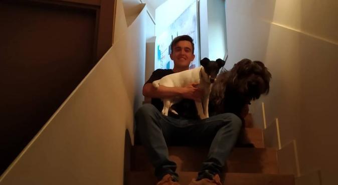 Marinadog:Ciudad de vacaciones canina, canguro en Madrid