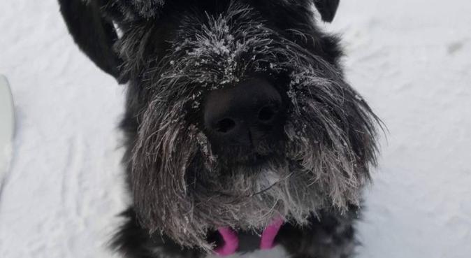 Hundpassning i Gröndal!, hundvakt nära Stockholm, Sverige