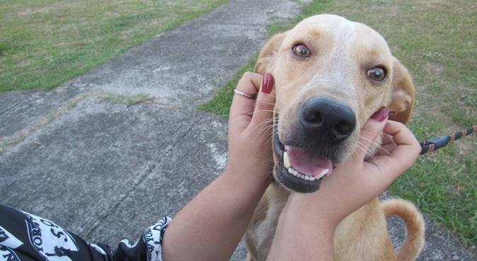 Votre compagnon comme si c'était le mien !, dog sitter à Chatou, France