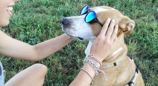 GIVE ME A ZAMPA!, dog sitter a Seregno, MB, Italia