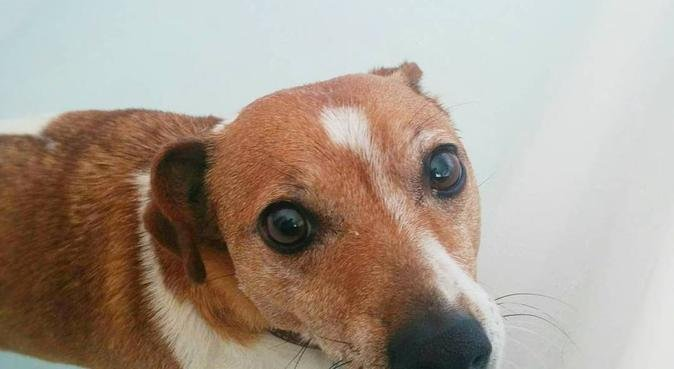 Dog Walking in Leckhampton & Warden Hill, dog sitter in Cheltenham
