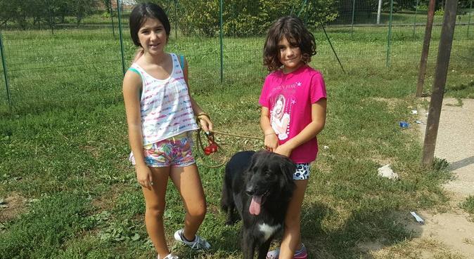 Tante attenzioni e divertimento!, dog sitter a cesano maderno
