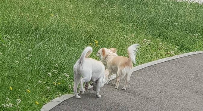 Le bonheur de vos amis a 4 patte c'est le miens, dog sitter à Talence, France