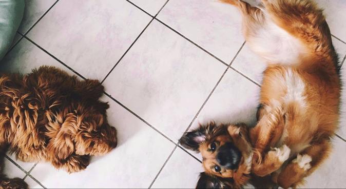 Les chiens heureux du canal, dog sitter à Reims