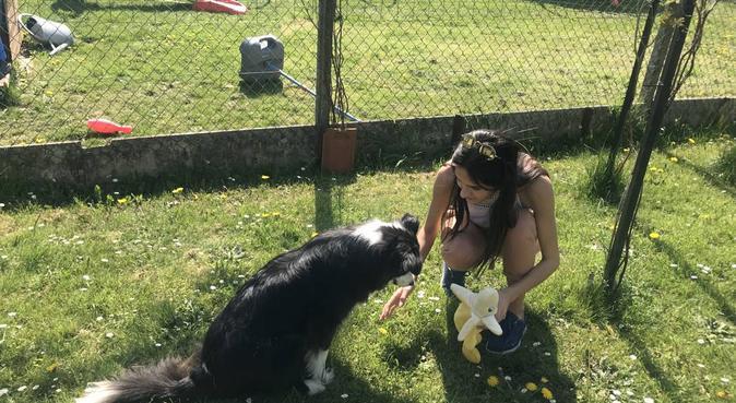 Un bol d'air frais pour vos animaux de compagnie, dog sitter à Lille, France