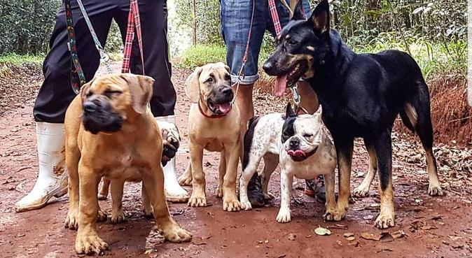 Hundeliebender Student mit flexiblen Arbeitstagen, Hundesitter in Munich