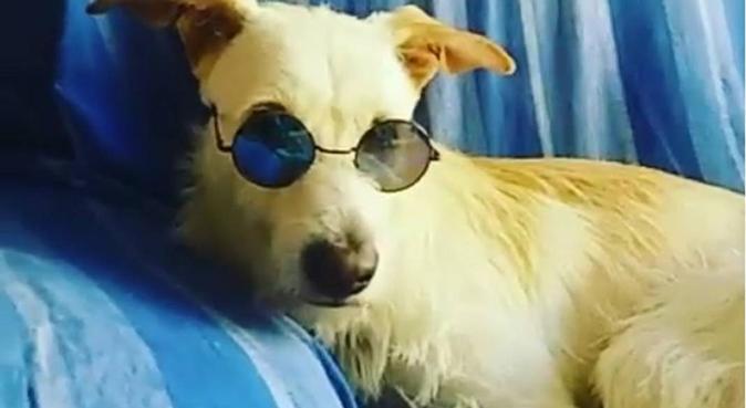 También cuido gatos y otros animales :D, canguro en San Fernando
