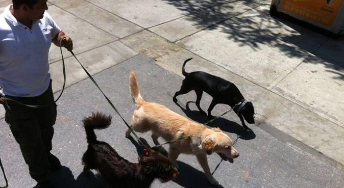 Amigo y guía de todos los caninos, canguro en Lugo