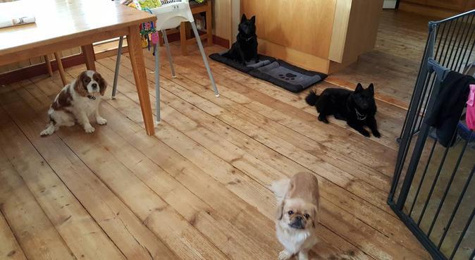 Bergby hundpassning, hundvakt nära Bergby
