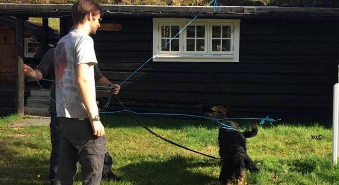 Trenger en firbent venn som er glad i tur!, hundepassere i Fornebu