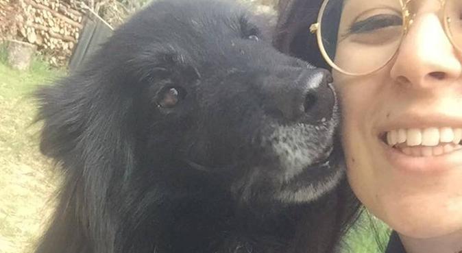 Passeggiate, coccole e divertimento, dog sitter a Rimini