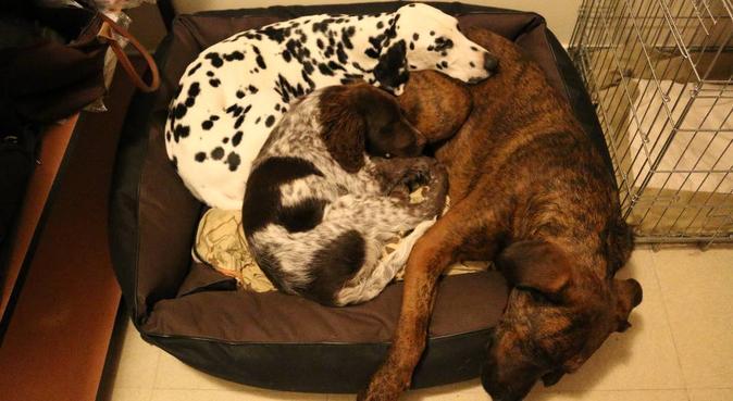 Le bonheur à l'école véto pour vos loulous !, dog sitter à Maisons-Alfort