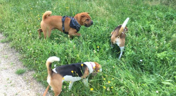 Le paradis des animaux, leur bien-être avant tout, dog sitter à Maisons-Laffitte