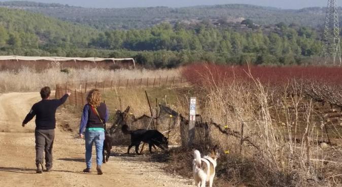 Love dogs ,love walking,Love Palma de Mallorca., canguro en Palma De Mallorca