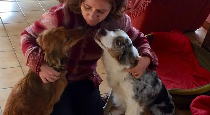 L'échappée Bêtes ! Maison avec jardin, dog sitter à Oberschaeffolsheim
