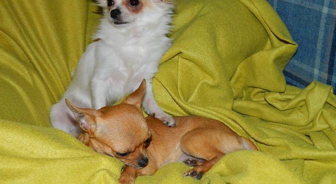 Amore , Coccole e Passeggiate ❤️🐾, dog sitter a Padova