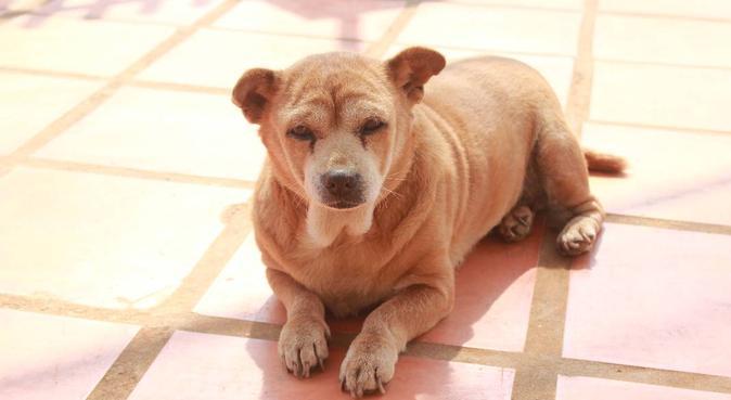 Dogs, my lovers - Perros, mis amores, canguro en Zaragoza