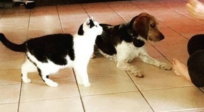 Vacances au top pour les chiens et chats !, dog sitter à Sotteville-lès-rouen