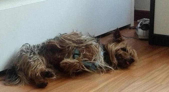 Coccole e passeggiate, dog sitter a La Spezia