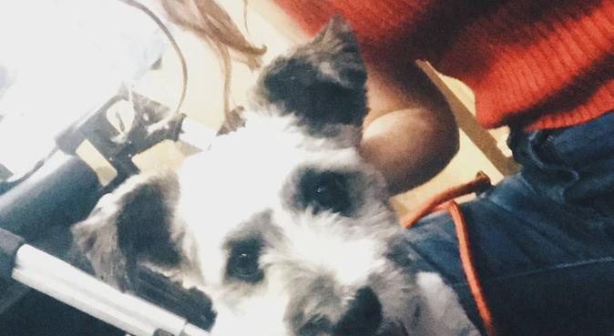 Cariñosa y disciplinada cuidadora de perros, canguro en Madrid